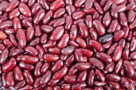 שעועית אדומה של סוגת