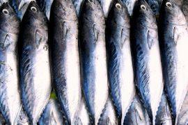 מרק דגים עשיר בסגנון מקסיקני