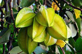 סלמון ברוטב תפוזים, מנגו וקרמבולה